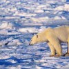 Climate Ready? New Urgency for Continuity Planning